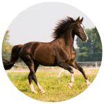 sonaray equestrian lighting